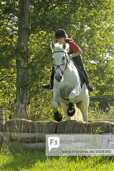 Schemel Englisch by Junge Reiterin Auf Einem Schimmel Beim Sprung 252 Ber Ein