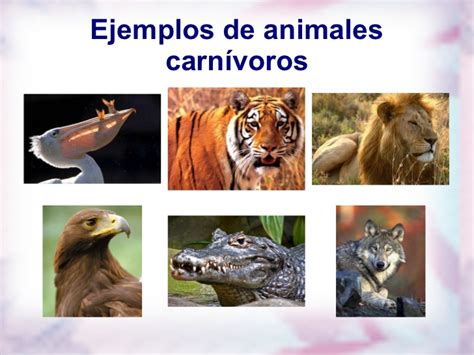 imagenes de animales carnivoros herbivoros y omnivoros carnivoros herviboros omnivoros