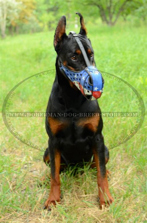 doberman dogs american flag painted leather muzzle for agitation work with doberman m77ap1017