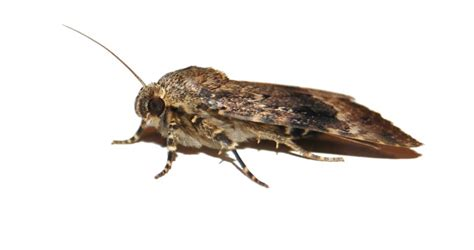 How Do I Get Rid Of Pantry Moths by How To Get Rid Of Pantry Moths Keep Them From Returning