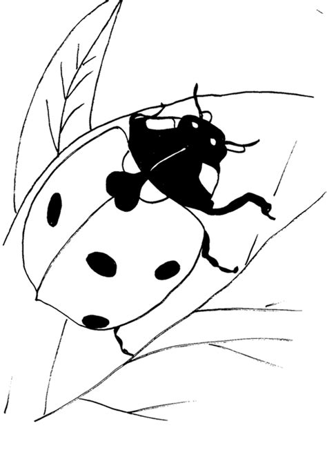 coloring pages of ladybug free ladybug coloring pages to print out and color