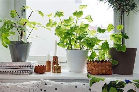 indoor small plants 4 best indoor plants for apartments that purify air and