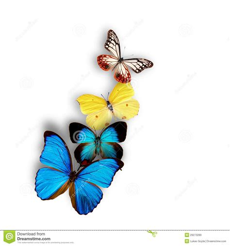 imagenes mariposas exoticas mariposas ex 243 ticas im 225 genes de archivo libres de regal 237 as