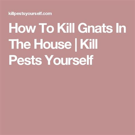 How To Kill Gnats In House 1000 ideas about killing gnats on fruit fly killer bug killer and gnat