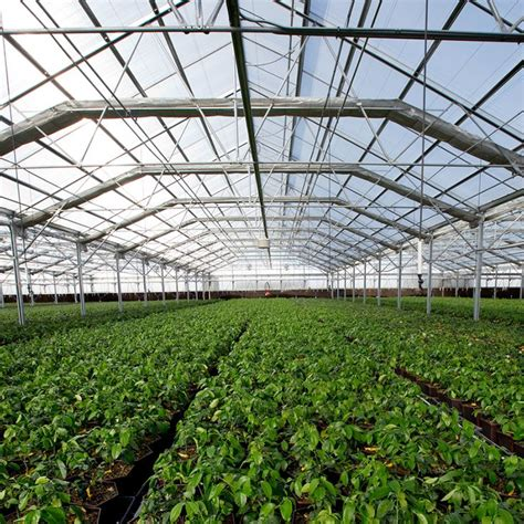 25 Best Ideas About Commercial Greenhouse On Pinterest