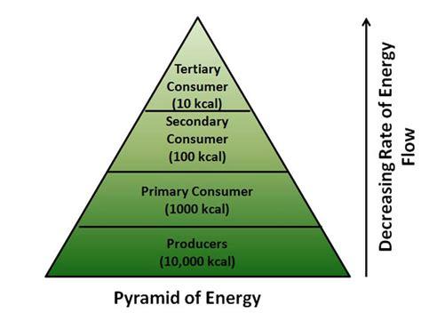 Diagram Of Pyramid Of Energy