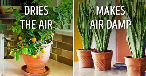 benefits of house plants 10 beneficial plants that drastically improve the
