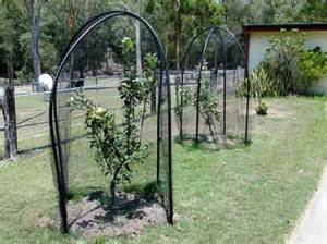 Netting For Fruit Trees - apple bird net netting fruit and vegetables from birds and other animals