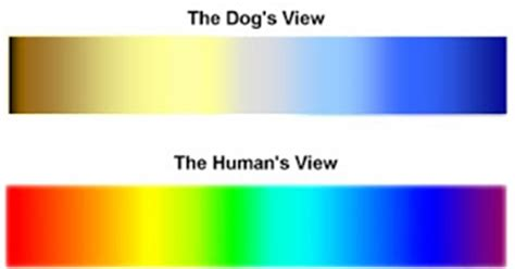 what colors can dogs see can dogs see colors 28 images the debunker can dogs see colors woot are dogs