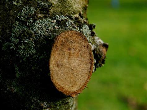 wann kann buchsbaum schneiden hecke b 228 ume richtig schneiden wann wie tipps