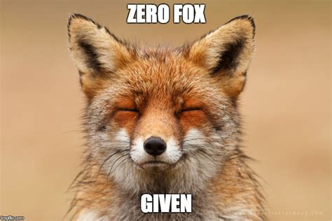 Meme Fox - fox meme 28 images fox meme 28 images red fox meme bad