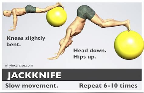stability ball exercises   illustrations