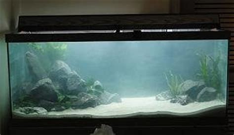 fish tank cloudy cloudy tank with in 2 days of water