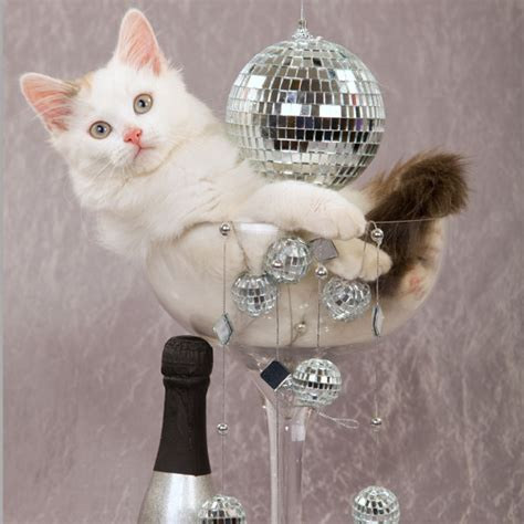 Happy New Year Cat Meme - cat new year celebration for more fun holiday cats visit
