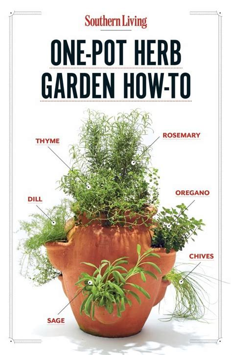 how to grow a herb garden in pots how to grow your own one pot herb garden grow your own
