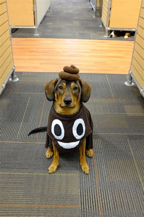 Dont Miss The Best Canine Costumes Onpeoplecom by 10 Hilarious Pet Costumes