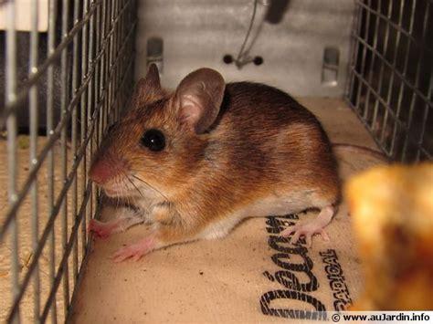 Capturer Une Souris capturer une souris