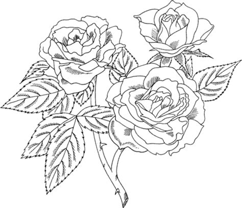 realistic rose coloring page europeana floribunda rose coloring page supercoloring com