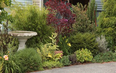 small trees and shrubs for landscaping in front yard hot landscaping ingenious inspiration ideas shrub garden design small for