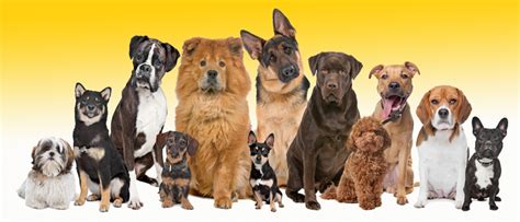 all types of dogs breeds list information for all breeds pedigree