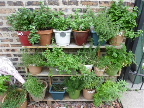 Herb Shelf herb garden and bottle wall thora s