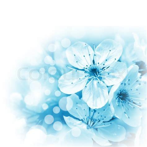 co d fiori light blue flower wallpaper wallpapersafari