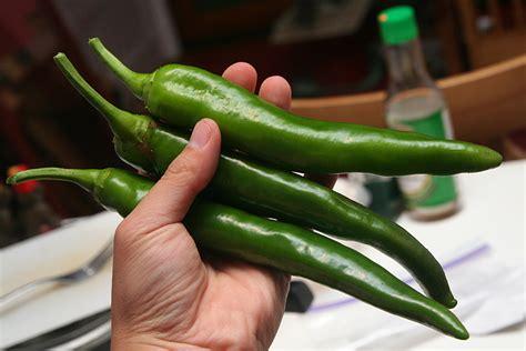 Garden Salsa Pepper by Iamtonyang