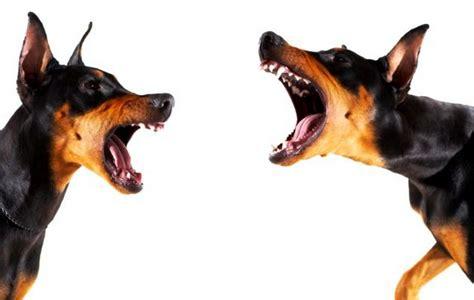 barking mad dog boarding amp pet sitting blog findadogminder