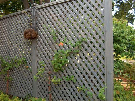 Privacy Trellis Fence Lattice For Privacy At Back Fence Lattice Privacy Screen