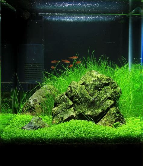 aquascape freshwater aquarium best 25 nano aquarium ideas on pinterest freshwater