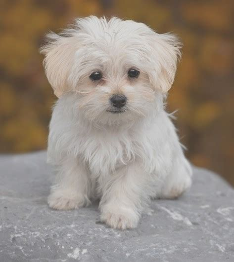 best small dogs the about best miniature breeds is about to be