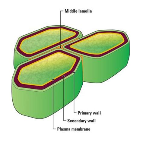 organelles biology period   eidell  great valley