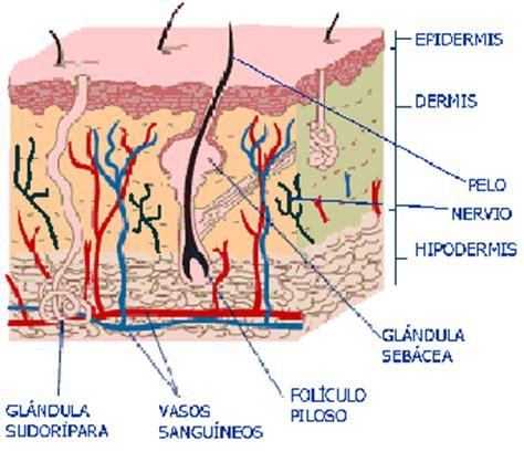 psoriasi interna biologia octubre 2010