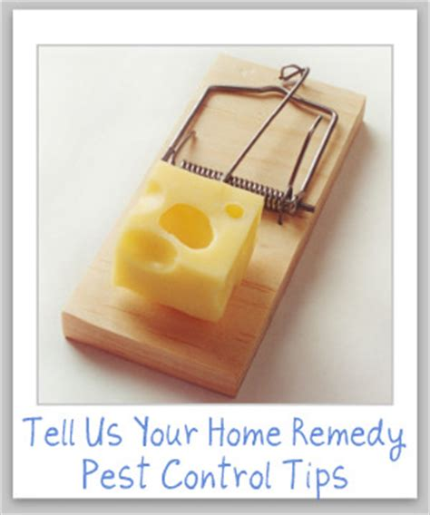 home remedy pest tips do it yourself pest