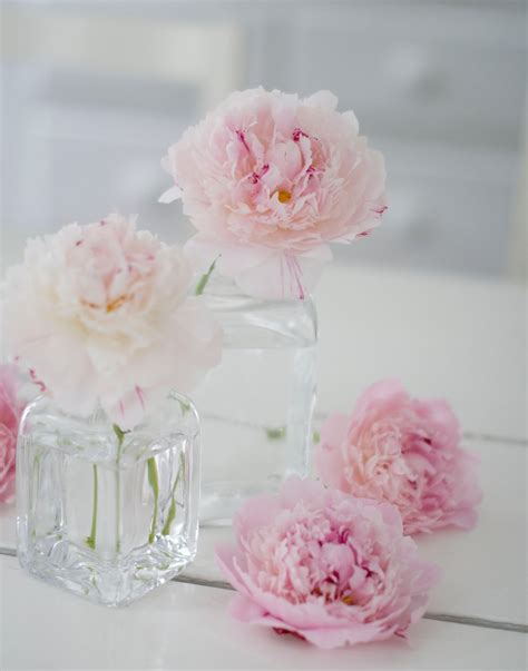 Peony Vase in the country pink peonies