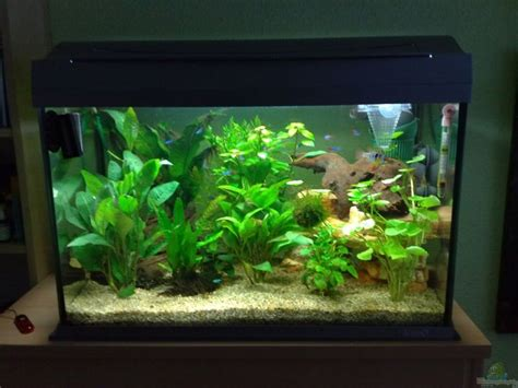 aquarium 100 l exle no 10258 from the category mixed america tanks