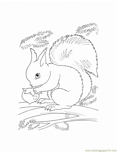 free coloring pages of wild animals free coloring pages of animals in the wild