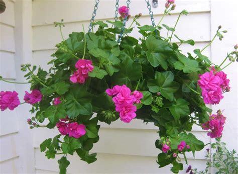 backyard patio with flowering hanging basket perennial