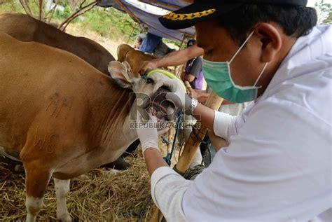 Cacing Bekasi ada cacing hati di sapi masjid agung bekasi republika