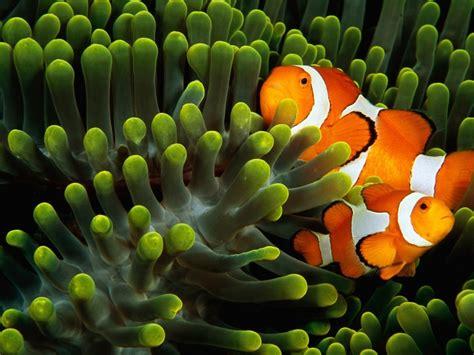 3d Di Bawah Laut by Aneka Gambar Pemandangan Bawah Laut Yang Menakjubkan