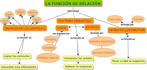 imagenes sensoriales wikipedia concepto aprender es divertido funci 211 n de relaci 211 n mapa conceptual