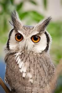 owl san diego zoo and san diego on pinterest