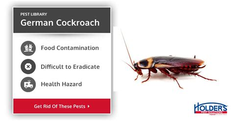 Bed Bugs How To Eradicate