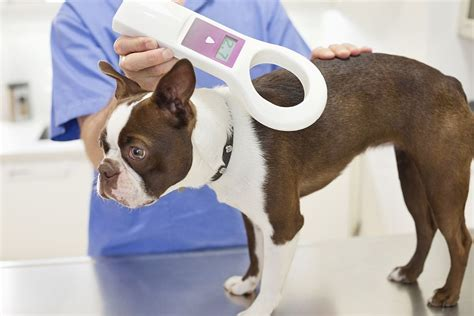 how much to microchip a microchip comes in to effect on april 6 this is how much it will cost