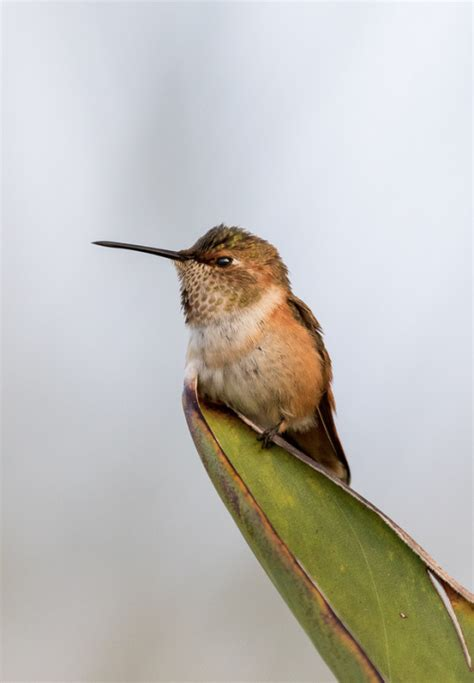 what is the only bird that can fly backwards hummingbirds are the only birds that can fly