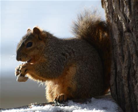 where do squirrels live