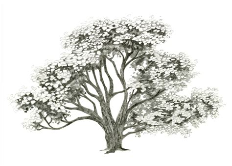 Drawing Trees by How To Draw A Realistic Tree Trunk Or Branch As Part Of