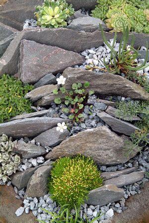 best 25 rockery garden ideas on succulent