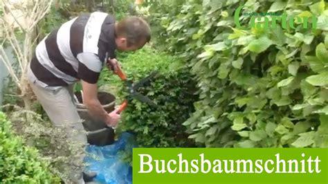 Buchsbaum In Form Schneiden 2025 by Buchsbaum Richtig Schneiden