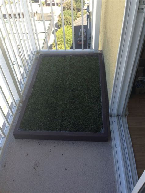 Dog Grass For Balcony by 17 Best Images About Dog Potty Grass On Pinterest For